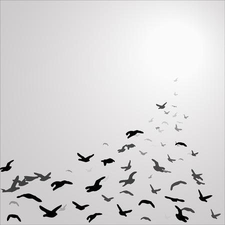 pajaros volando: bandada de aves en el cielo gris volando hacia el sol