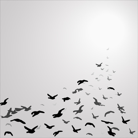 flock of birds in the gray sky flying towards the sun