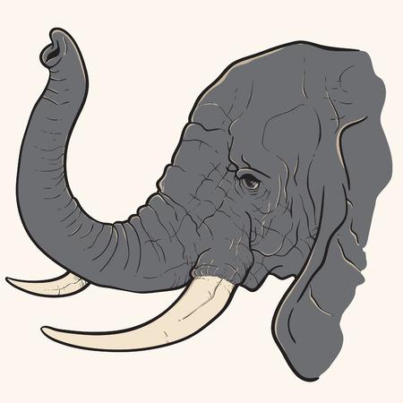 tusk: African Elephant Illustration
