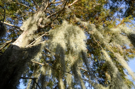 bayou swamp: Famous Louisiana bayou swamp tour, New Orleans