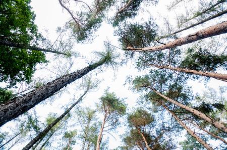 vertigo: treetops vertigo view in the forrest Stock Photo