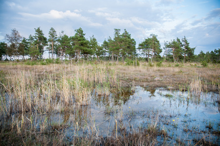 bogs: marshes, swamps and bogs in Estonia