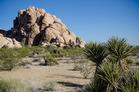 joshua: Joshua tree national park, California Stock Photo