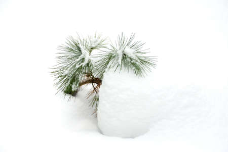 bedspread: Young cedar on the snow bedspread of January Stock Photo