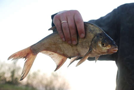 reservoirs: Ryba is pike Perch, local reservoirs Stock Photo