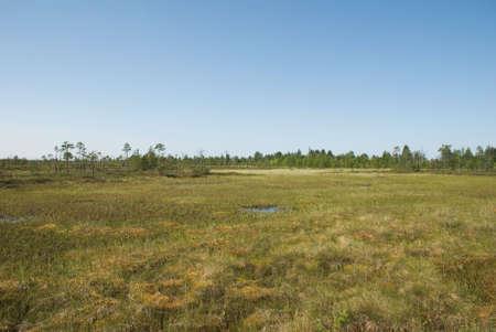bogs: Shallow aquatic grass of north bogs