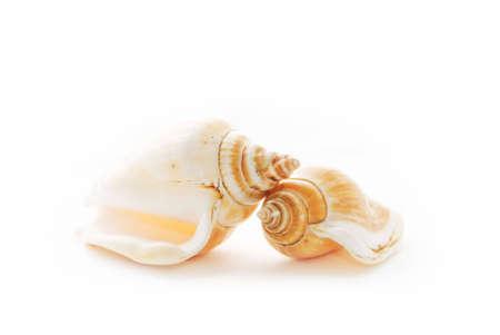 cockleshells: Sea cockleshells on white Stock Photo