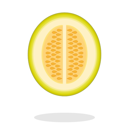 Illustration of a half melon with drop shadow. Isolated on white background. Muskmelon - Galia