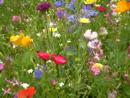Gros plan, champ, pré, fleurs, floral, fond Banque d'images - 86040160