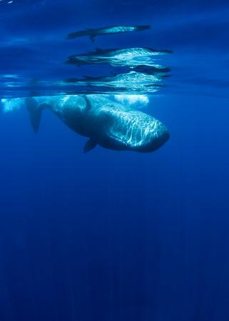 baby sperm whale