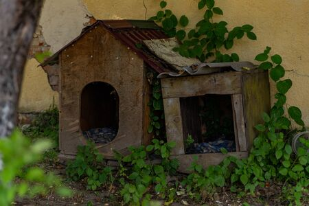 old dog houses fall apart from old age