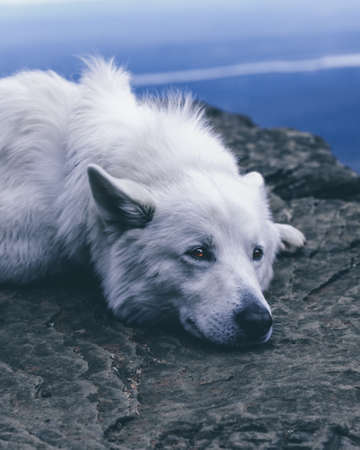 Dog resting in the mountains