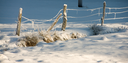 freezed: Fence in winter