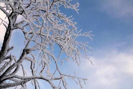 Verschneite Zweig im Winter Standard-Bild - 91279955