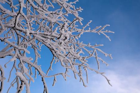 Verführung Zweig im Winter Standard-Bild - 91201487