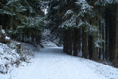 Path through the snowy forrest at german mountain called Rothaargebirge 版權商用圖片