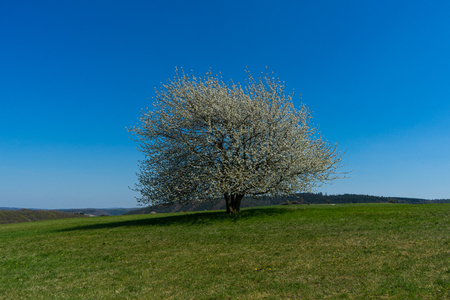 Landscape with lonly apple tree in the german Rothaargebirge and cloudlesse sky