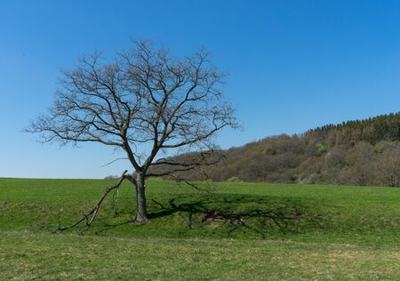 Landscape with leafless tree in the german Rothaargebirge Stock fotó