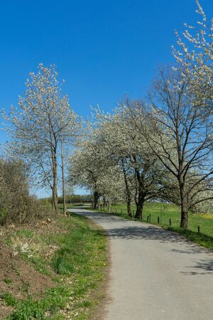 Agriculture path with some apple trees Stock Photo
