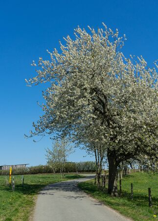 Agriculture path with apple trees and cloudless sky