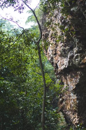indonesian biodiversity: Cave