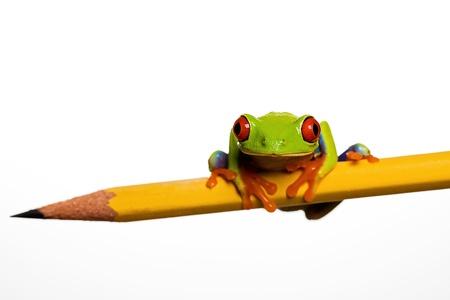 Kikker op een potlood