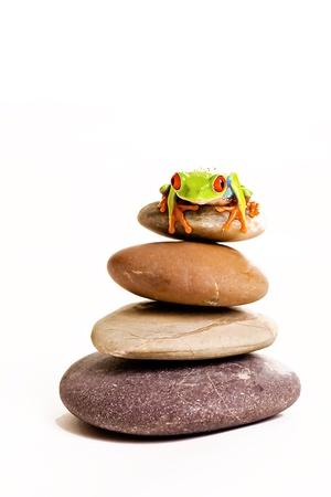 Frog on rocks photo