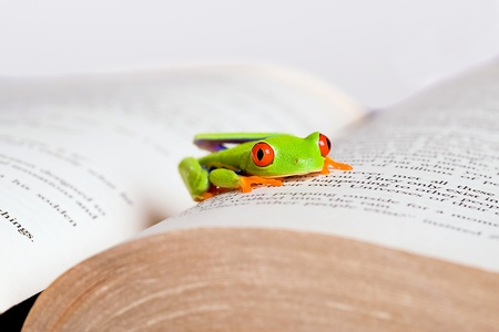 Frog in a book photo