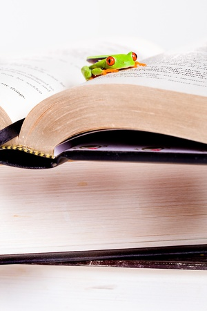 frog on books photo