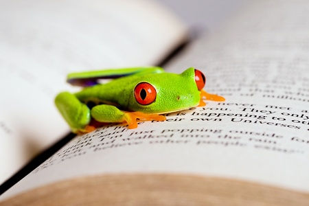 Frog on a book photo