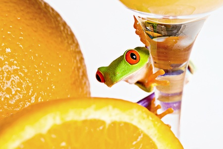 Frog with Fresh Oranges photo