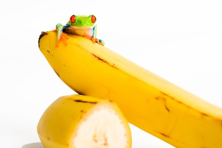fruit frog photo