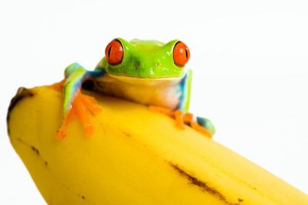 Frog on a banana photo
