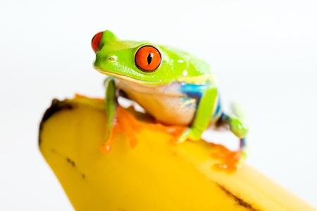 Frog on a banana Stock Photo - 9209290