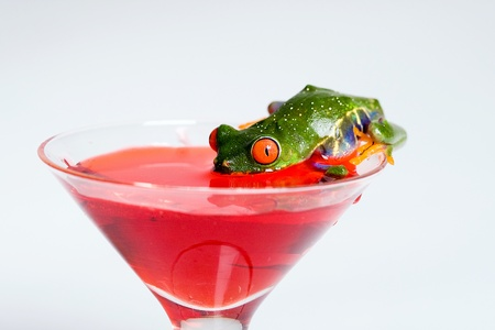 Frog Drinking a martini Stock Photo - 9208419