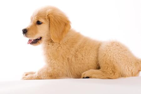 Puppy profiel Stockfoto