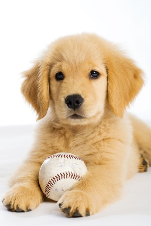Puppy with Baseball photo