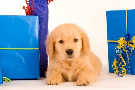 Puppy als cadeau