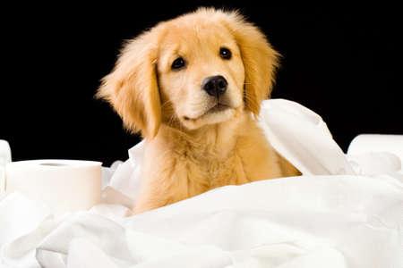 papel higienico: perrito lindo y suave en una pila de papel higiénico