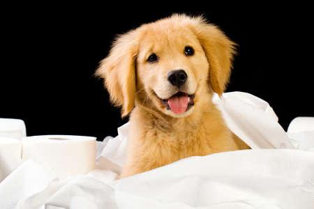 Schattig, zachte puppy in een stapel van wc-papier Stockfoto - 10731978
