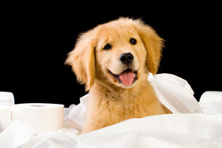 ply: cute, soft puppy in a pile of toilet paper Stock Photo
