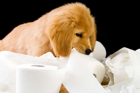 cute, soft puppy in a pile of toilet paper Фото со стока