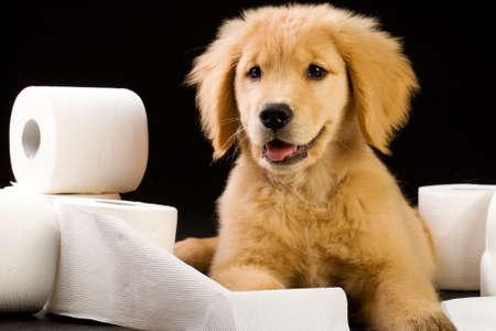 トイレット ペーパーの山で柔らかく、かわいい子犬