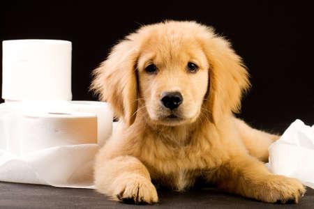 Schattig, zachte puppy in een stapel van wc-papier Stockfoto - 10732001