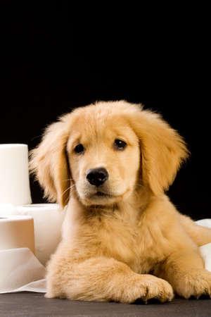 schattig, zachte puppy in een stapel van wc-papier Stockfoto