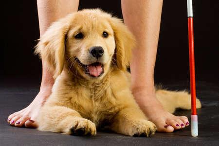 De geleidehonden in opleiding