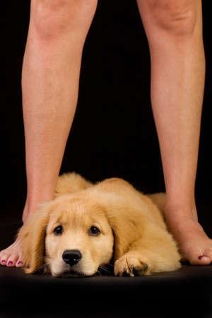 cute puppy dog at the feet of his master photo