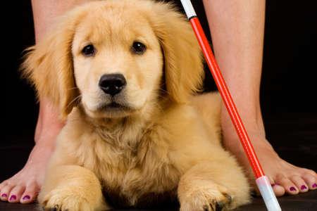 Service Dog in Training photo