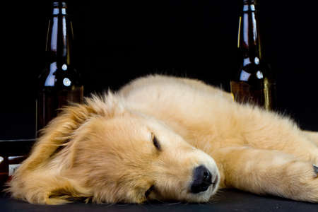 drunk dog passed out with beer bottles photo