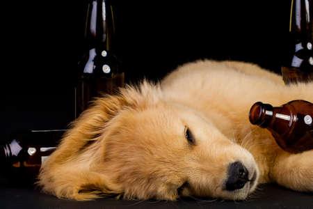 술에 취해 개 스톡 콘텐츠